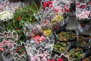 Flori de fLORII (24)