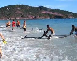 delfini esuati