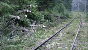 copac calea ferata