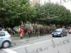 Elefanti in oras (13)