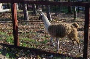 Inaugurare zoo 20 nov 2013 (22)
