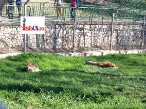 Zoo 30 mart (8)
