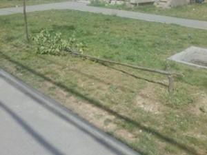 copac rupt1