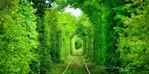 tunel Florin Avramescu