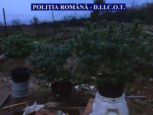 foto-cannabis-1
