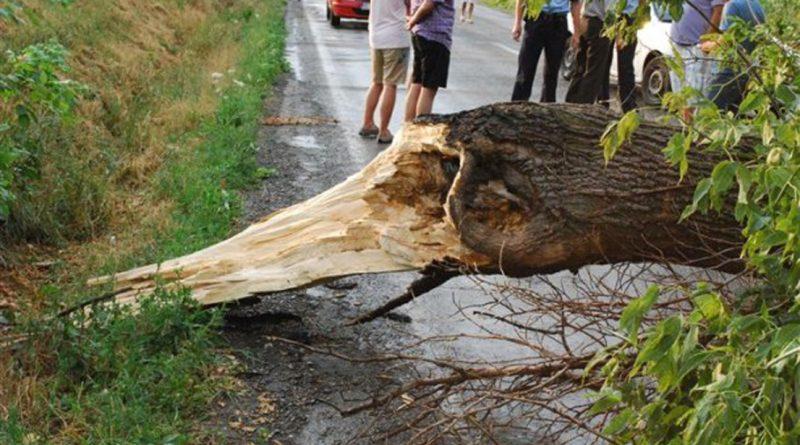 Trafic blocat de un copac pe DN57