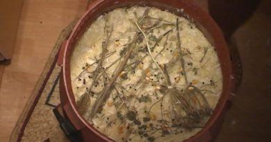 Varza murată în straturi, fără apă, tocată şi căpăţână VIDEO