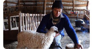 Vremuri grele peste Almăj – Poveste cu ciobanul adevărat din Banatul Montan VIDEO