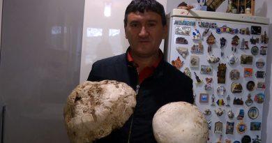 Ciuperca uriasa facuta tocanita cu un gratar pe langa VIDEO