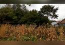 Banatul Montan și vestul țării sub cod portocaliu de vânt puternic VIDEO