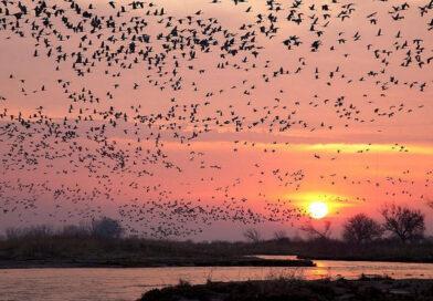 Ziua Mondială a Păsărilor Migratoare marcata la APM Caras Severin VIDEO